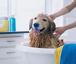 Rub-a-dub, dub, doggie in the tub!