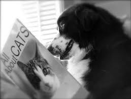 "Dog reading ""all about cats"""