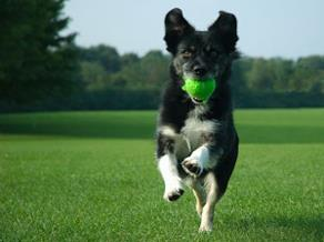 Returning tennis ball!